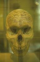 人物の頭がい骨と脳(セピア)
