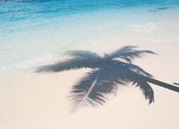 砂浜のヤシの木影と波 モルディブ