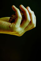 貝殻を持つ手