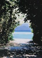 木の間から海