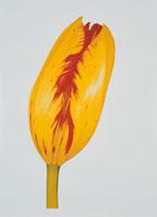 1本のチューリップのつぼみ(黄色・赤)