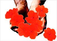両手に持つ赤い花