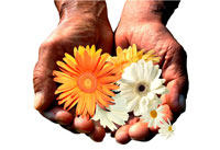 両手に持つ黄色と白い花