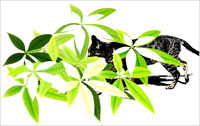 緑の葉の中を歩く猫