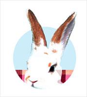 うさぎ 00243010379| 写真素材・ストックフォト・画像・イラスト素材|アマナイメージズ