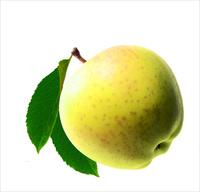 葉つきリンゴ