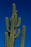 サボテン フェニックス アリゾナ州 00249000844M| 写真素材・ストックフォト・画像・イラスト素材|アマナイメージズ