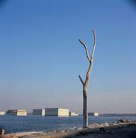 海岸沿いの木