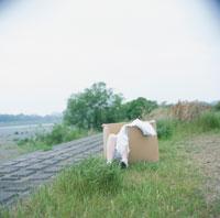 ダンボールの中の白いドレスを着た女性