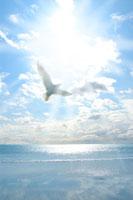 鳥と太陽と海