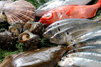 同じ向きに並ぶ魚と貝
