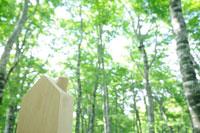 新緑のブナと木製の家