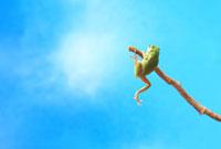 木の枝につかまるアマガエルと青空
