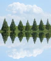 並んだ樹々と白い雲の映り込み
