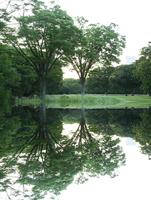 公園の樹々の映り込み