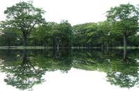 公園の樹々の映り込みのパノラマ