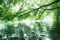 世界遺産プリトヴィツェの湖畔の新緑