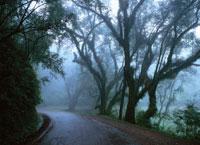 サルタとフフイの間の熱帯雨林  アルゼンチン