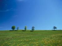 草原の木々