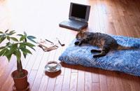 フローリングにパソコンと寝転ぶ猫
