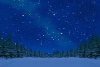 雪原の林と星空 北海道