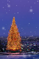 高台から望む街灯りとクリスマスツリーに降る雪 00299010569| 写真素材・ストックフォト・画像・イラスト素材|アマナイメージズ