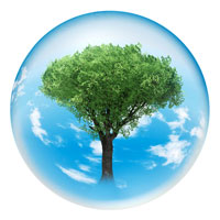 ガラス球内に樹木