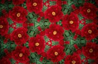 万華鏡の万華鏡の花のパターン(牡丹)