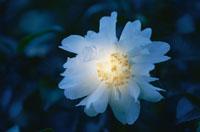 花に当たる光