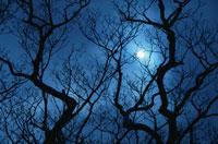 冬の夜空の月と木