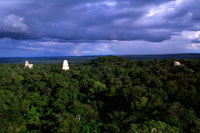 密林に聳えるマヤ遺跡 00414010380| 写真素材・ストックフォト・画像・イラスト素材|アマナイメージズ