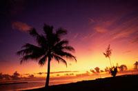 ビーチのヤシと夕暮れ 00414010665  写真素材・ストックフォト・画像・イラスト素材 アマナイメージズ