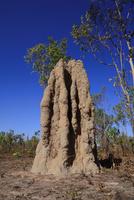カカドゥの蟻塚