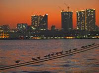 晴海埠頭とゆりかもめ 00425010789| 写真素材・ストックフォト・画像・イラスト素材|アマナイメージズ