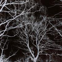 木の枝 B/W