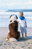 外国人の男の子とイヌの後姿(セントバーナード)