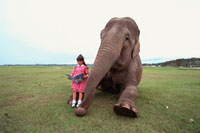 アジアゾウと読書する外国人の女の子