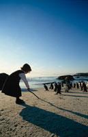 海岸の外国人の女の子とペンギンの群れ