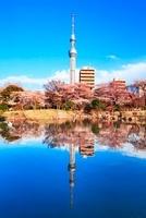 隅田公園の桜と逆さスカイツリー 00545012961| 写真素材・ストックフォト・画像・イラスト素材|アマナイメージズ