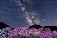 花桃の里と天の川 00545014640| 写真素材・ストックフォト・画像・イラスト素材|アマナイメージズ