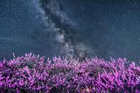 花桃の里と天の川 00545014641| 写真素材・ストックフォト・画像・イラスト素材|アマナイメージズ