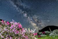 花桃の里と天の川 00545014667| 写真素材・ストックフォト・画像・イラスト素材|アマナイメージズ