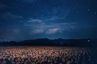 ひまわり畑と夜空