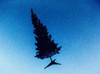 青空を飛ぶ木