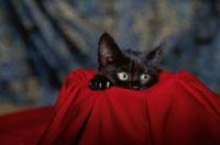 黒い子猫と布