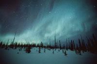 オーロラと森林の風景 アラスカ