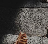 コンクリートの階段と枯れ葉 00693011401| 写真素材・ストックフォト・画像・イラスト素材|アマナイメージズ