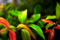 緑と赤の葉