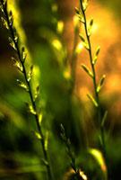葉の群れ 00693011545| 写真素材・ストックフォト・画像・イラスト素材|アマナイメージズ