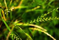 葉の群れ 00693011546| 写真素材・ストックフォト・画像・イラスト素材|アマナイメージズ